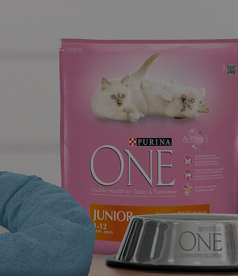 services-purina-junior