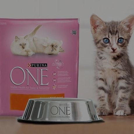 slider-purina-junior